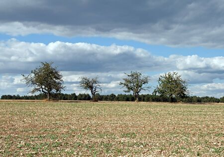 Trees in a field, under a threatening sky  Burgundy France  photo