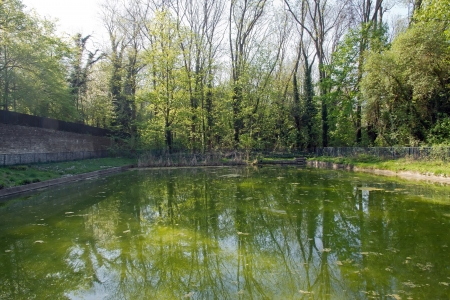 stagnate: pond enclosed in a forest, spring in France  Stock Photo