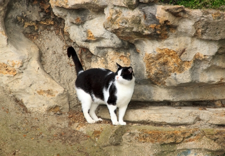 Black and white cat abandoned in a Parisian public garden  France