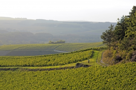 Landscape of vineyards near of Auxerre  vines of Chablis Burgundy France   Stock Photo