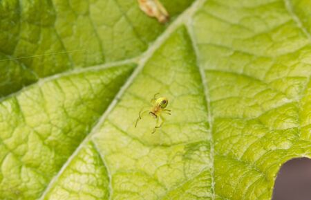 Spider gourd on the back, weaving its cloth photo