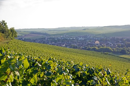 wine grower: Hills of vineyards of ch�blis, far off the village  Burgundy France  Stock Photo
