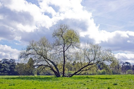 force of the nature: willow under the clouds, ancient tree under a spring sky threatening (France)