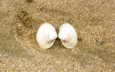 almeja: El beso narcisista de almeja abierta Foto de archivo
