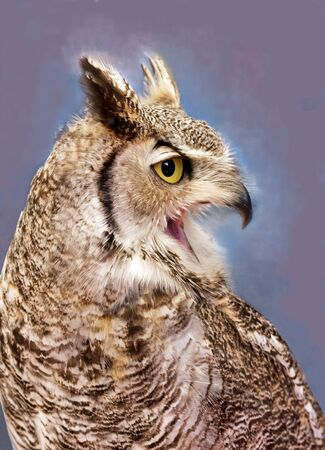 Great horned owl the cry