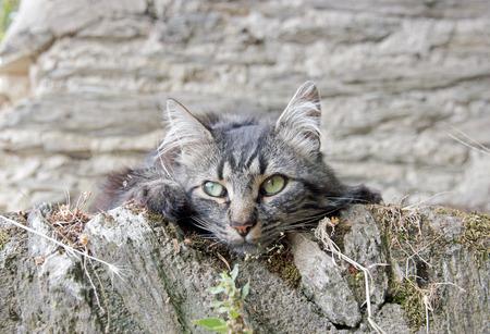 gray cat: portrait of a little gray cat, kitten walls Stock Photo