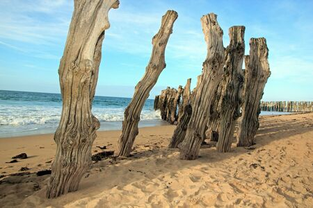 st  malo: Saint-Malo, the sea between the tree trunks Brittany France