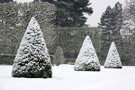 winter garden: Winter Garden, yew trees under snow near Paris France