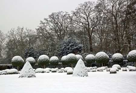 Winter garden, boxwood and yew trees under snow near Paris France