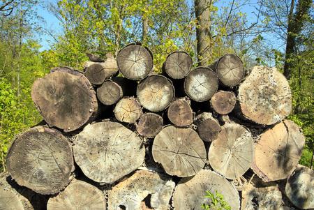 Troncs d'arbres percés de petits trous pour accueillir les insectes Banque d'images