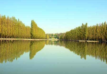 Rangée de peupliers et leurs reflets dans l'eau.