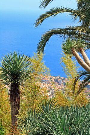 Côte de Madère, entre les palmiers et l'océan (Madère, Portugal)