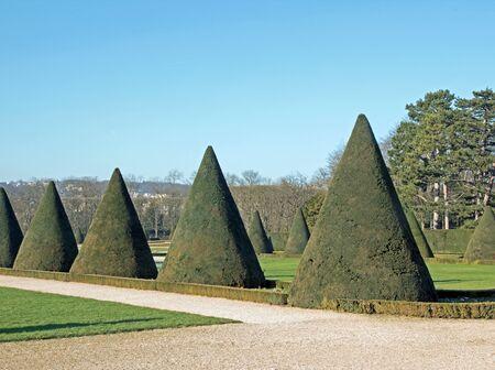 Ifs taillés cône, d'un jardin à la française en été (France) Banque d'images