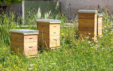 Hives dans la ville dans une zone verte. Une nouvelle ressource de l'apiculture urbaine. Banque d'images