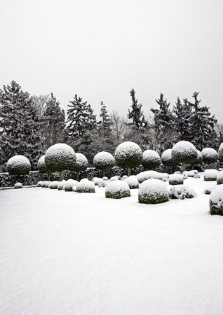boules de buis entre ciel et les nuages, dans un jardin français (France) Banque d'images