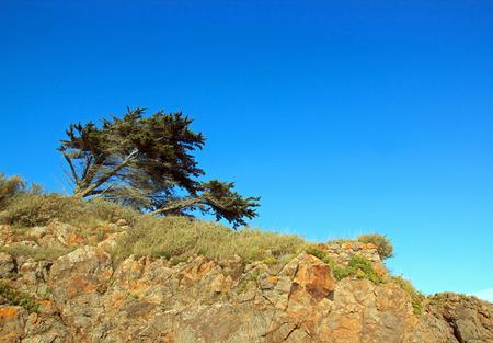 L'arbre qui se plie mais ne casse pas, la nature fait de la résistance