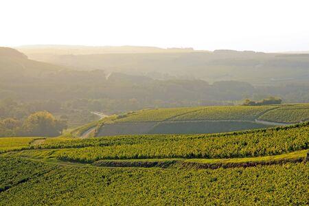 Collines de vignes, vin de Chablis, près d'Auxerre par temps brumeux (Bourgogne, France)