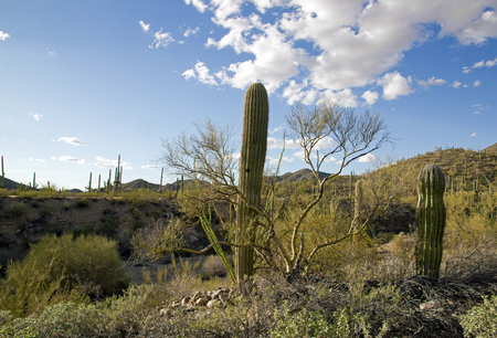 Saguaro Park, near Tucson in Arizona - USA Stock Photo