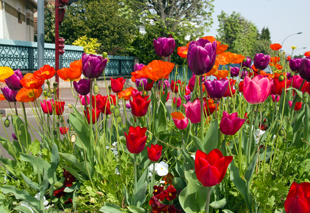 Tulip beds in town. France. Flowers in the city in the summer.