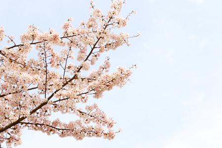foreigner: Cherry Tree