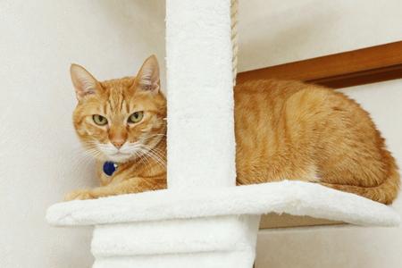 CAT Reklamní fotografie - 94429667