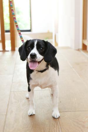 Smiling Mixed breed dog