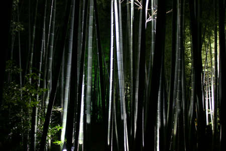 the thicket: bamboo thicket