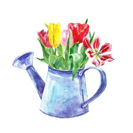 Watercolor spring floral bouquet with tulips in a rustic watering can. Set of hand painted colorful flowers in vintage pot. Beautiful arrangement ror greeting cards, mothers day, womens day, invitations, greetings, textile, ad, covers.