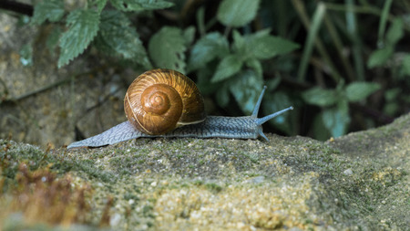 Snail on the rock Banco de Imagens
