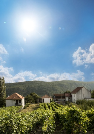 privat: A privat wineyard in a little village in croatia  Stock Photo