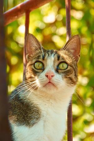adentro y afuera: retrato de un gato en el jard�n fuera de foco