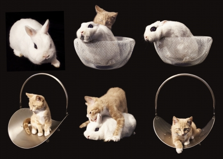 collection of animals, kitten with rabbit on black background photo