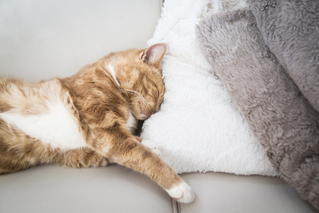 cute red cat sleeping on couch next to  a blanket