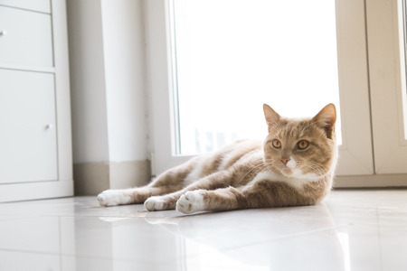 Ginger Cat relaxing at home on floor photo