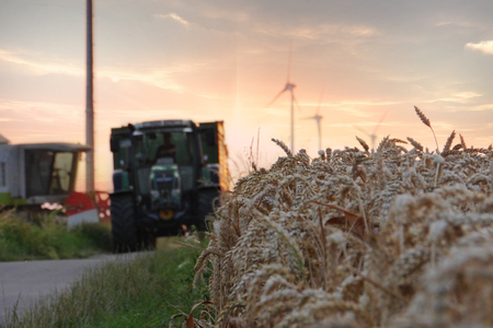 A Tractor passing by a field of wheat with some wind tubines and a harvester in the background while the sun sets
