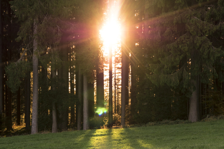 Fiery morning sunrise from between forest trees.