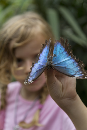 Blue butterfly and a little girl. One hand holding up the insect. Medium shot.
