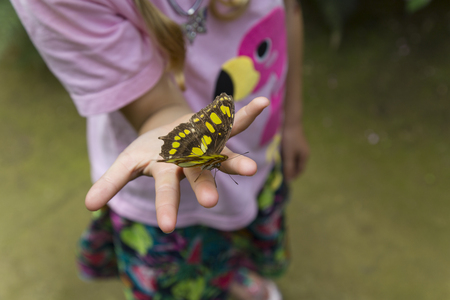Open palm of a childs hand with butterfly on the fingers. Close up. Selective focus. High angled view.