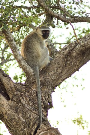 monkey sitting on a ree looking at something