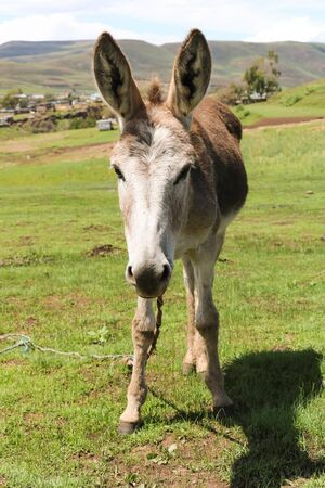 cute donkey standing on green land on sunny day