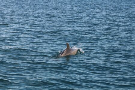 group of dolphins swiming in the sea