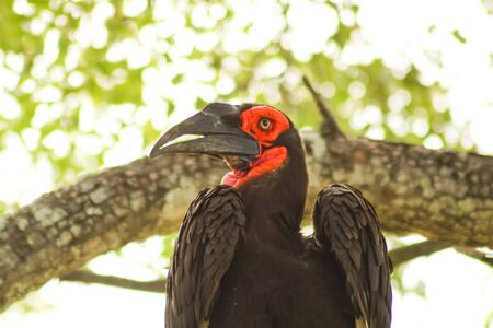 exotic bird with red face sitting on tree branch