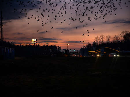 Frankfurt, Germany. Autumn, 20016. Twilight panorama with flock of swallows flying over highway in Germany.