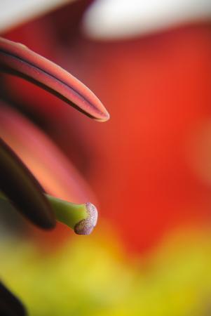 mal: Fleur du mal