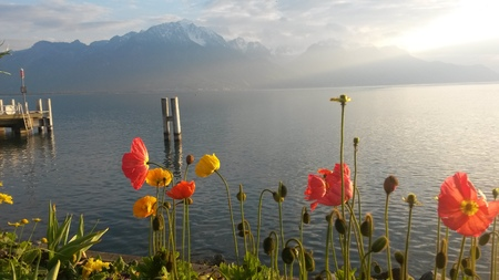 montreux: Tulips at the lakes edge, Montreux, Switzerland.