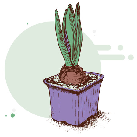 Hyacinth in a pot icon.