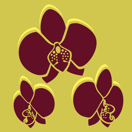 sarong: Vector Flower. Orchid in brown color. Easy to edit. Perfect for invitations or announcements. Illustration