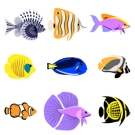 Tropical reef fish collection. It is easy to edit. Vector illustration. Stock Photo