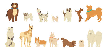 Dog character cartoon collection. Funny different breeds dogs flat style. Hand drawn friendly animals husky, corgi, pug and dachshund. Cute loyal muzzle. Isolated vector illustration Vettoriali