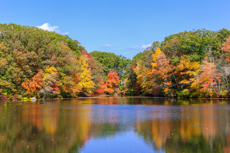 Fall color is in full force in seekonk massachusetts on a gorgeous Autumn day Banco de Imagens